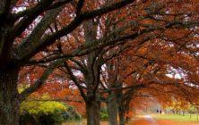 nature-q-c-978-415-4